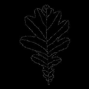 Lorenzo Gaetani Design - Leaves - foulards