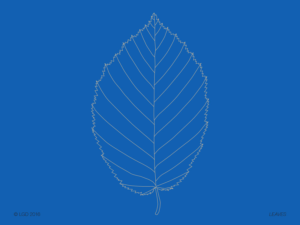 Lorenzo Gaetani Design - Leaves